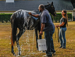 Cary Frommer Bath time for a yearling