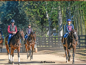 Cary Frommer - Race hiorses hacking out at Aiken, SC